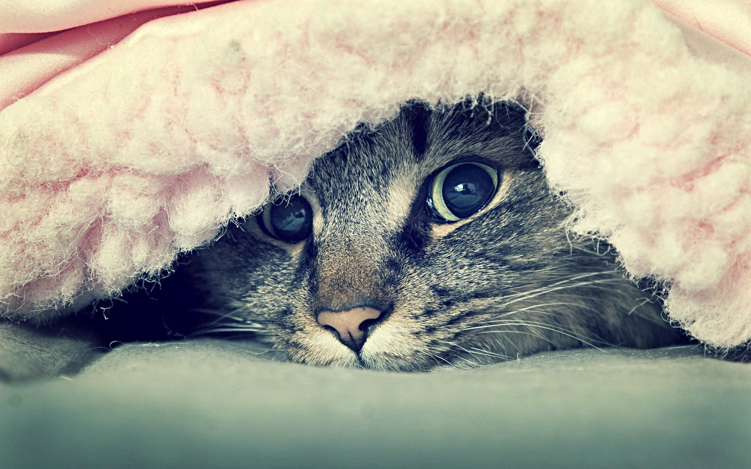 99062 download wallpaper Animals, Cat, Muzzle, Sight, Opinion, Peek Out, Look Out screensavers and pictures for free