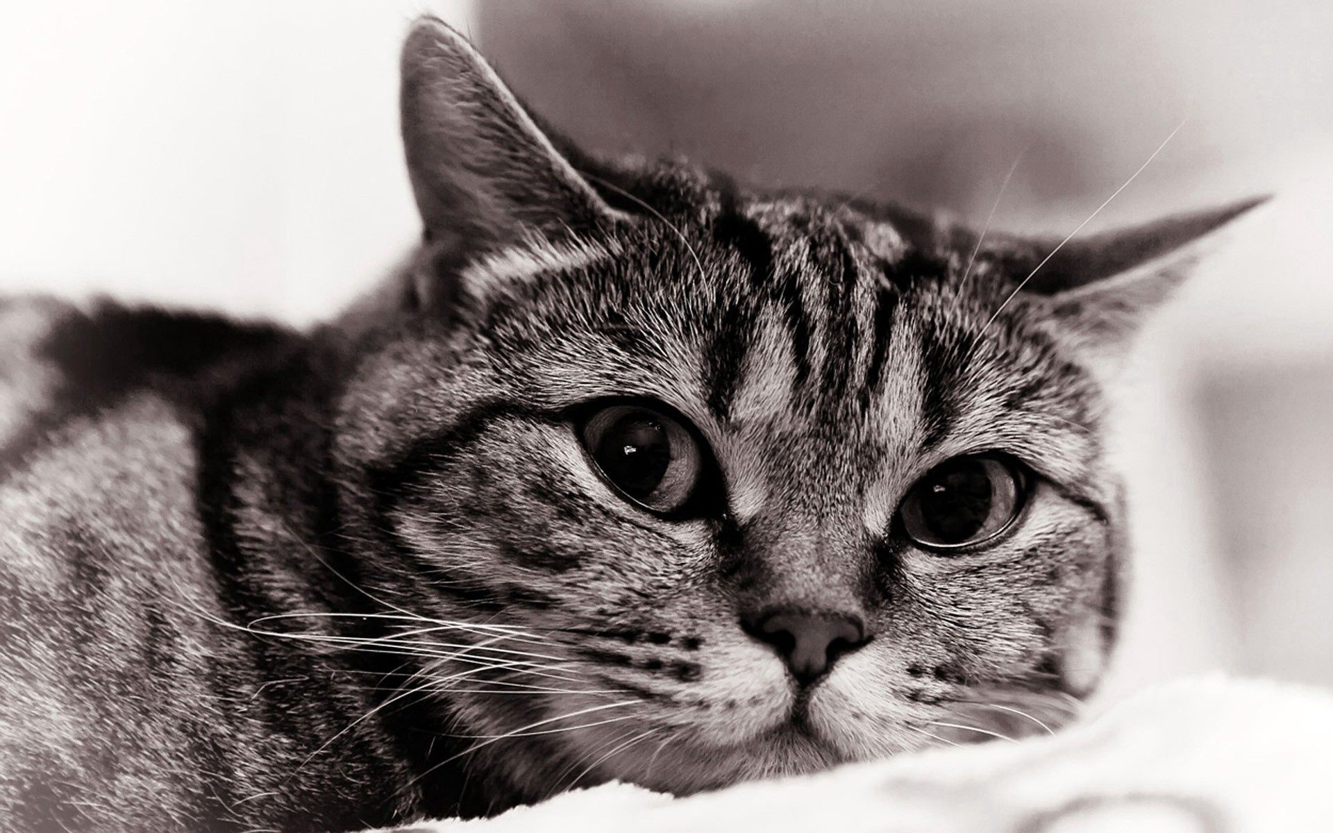 67274 download wallpaper Animals, Cat, Muzzle, Sight, Opinion, Bw, Chb, Sadness, Sorrow screensavers and pictures for free