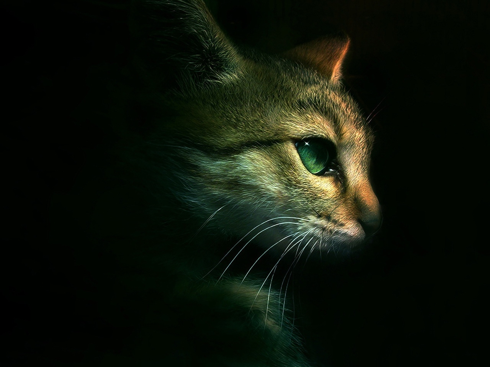 4400 download wallpaper Animals, Cats screensavers and pictures for free