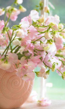 9993 скачать обои Растения, Цветы - заставки и картинки бесплатно