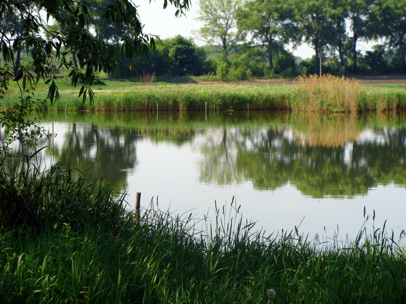 25086 скачать обои Пейзаж, Река, Трава - заставки и картинки бесплатно