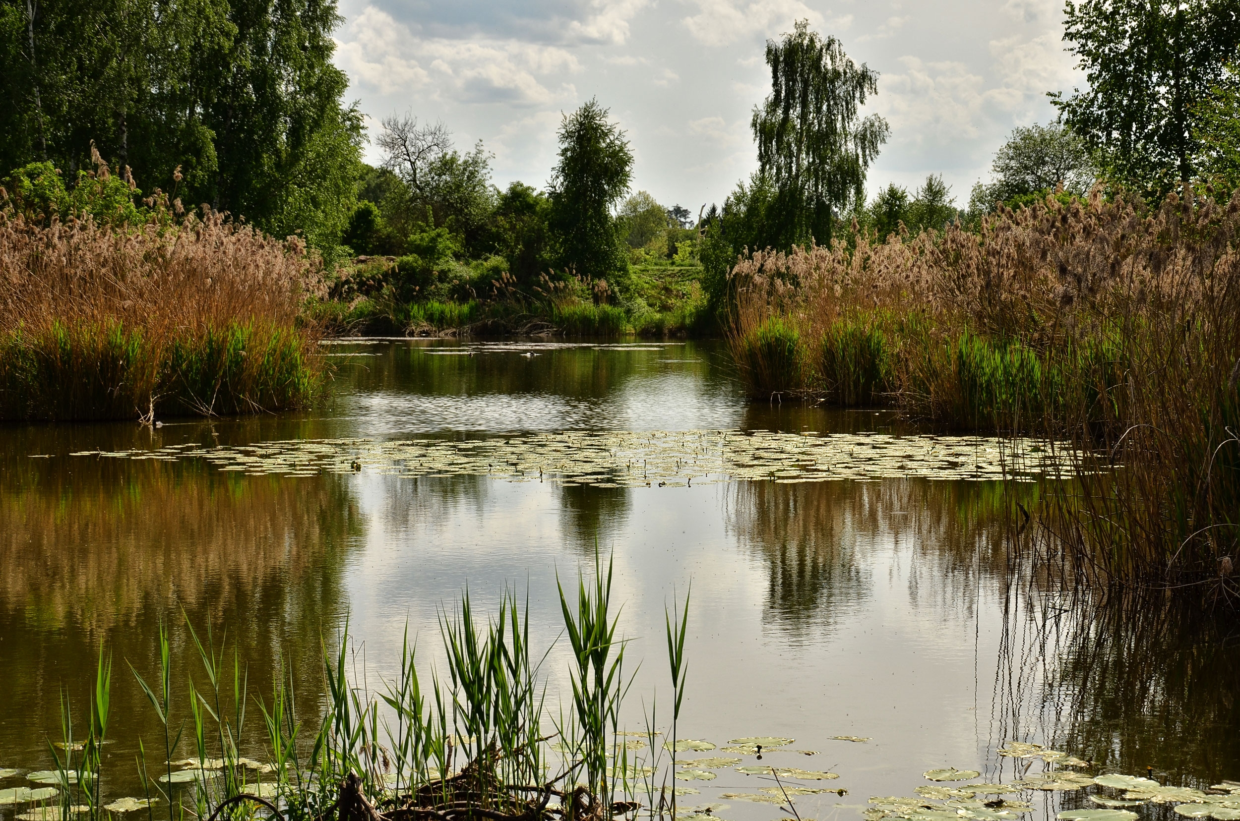 120842 Screensavers and Wallpapers Landscape for phone. Download Nature, Pond, Trees, Plants, Landscape pictures for free