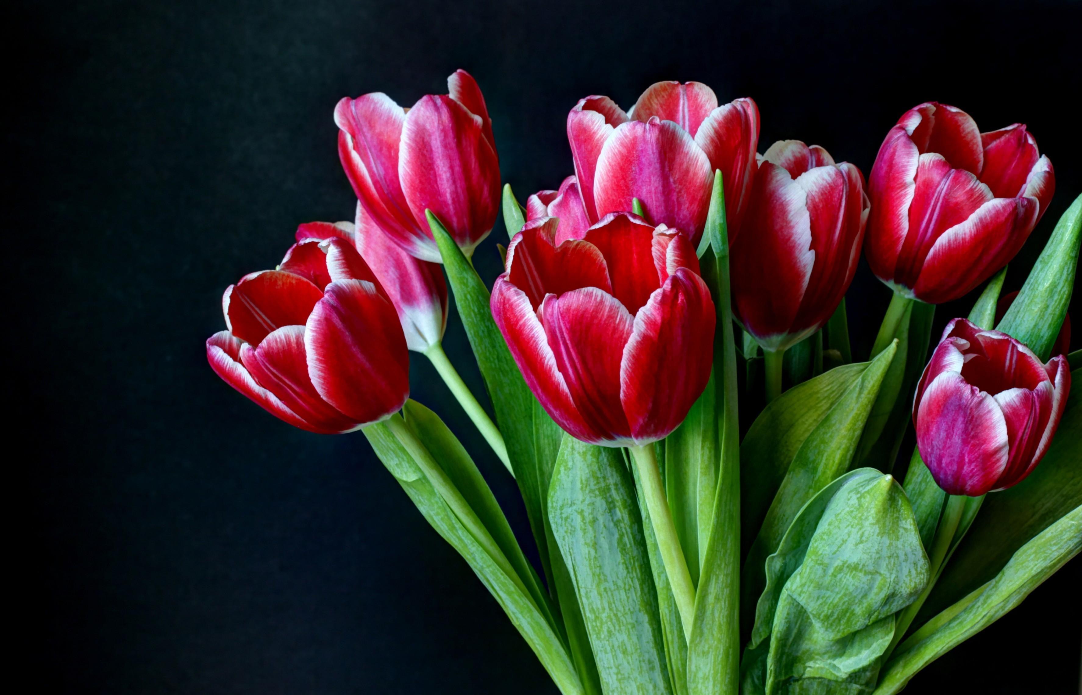 81149 обои 1080x2400 на телефон бесплатно, скачать картинки Букет, Тюльпаны, Цветы, Двухцветные, Темны Фон 1080x2400 на мобильный