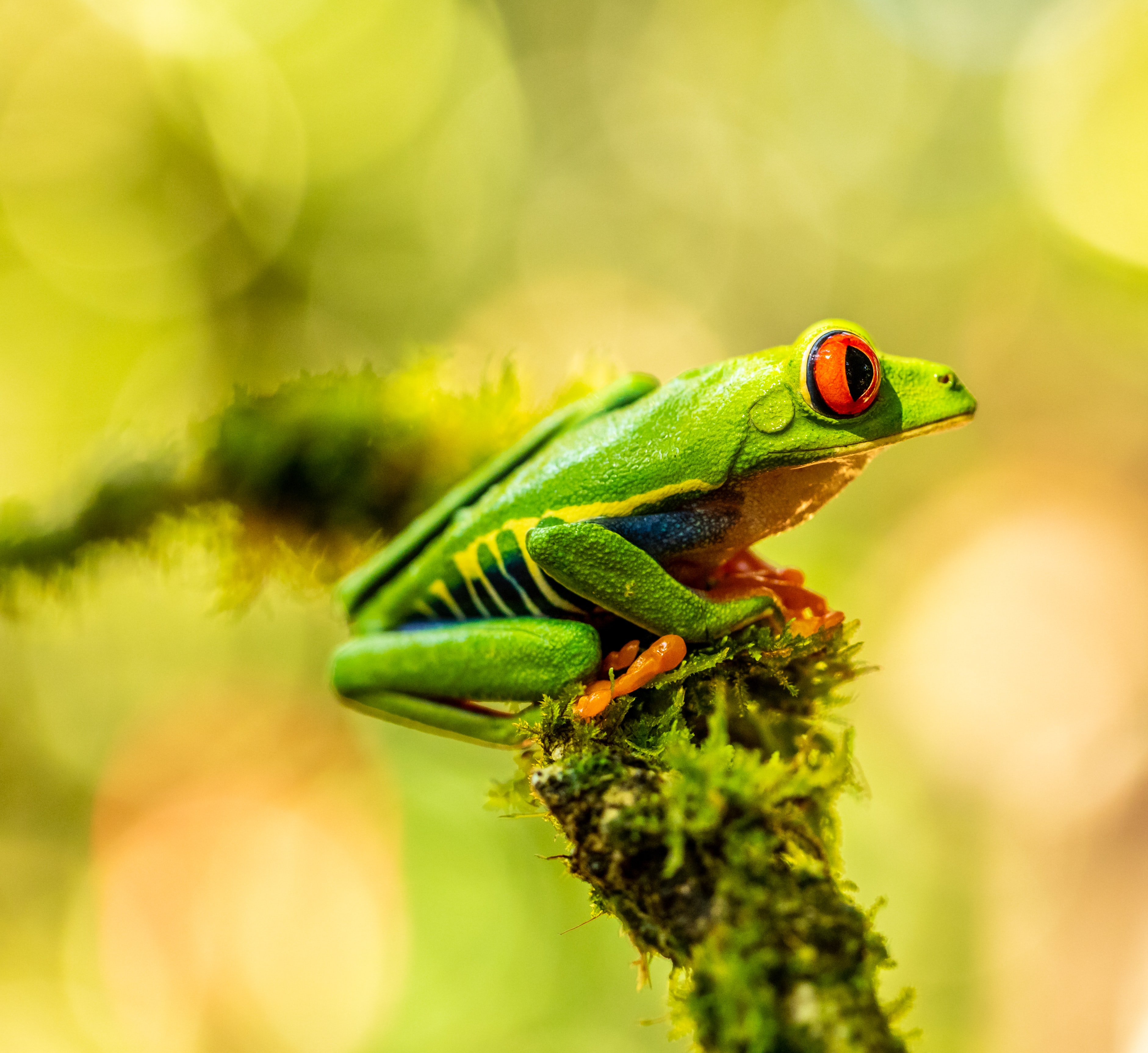86234 download wallpaper Animals, Frog, Amphibian, Animal screensavers and pictures for free