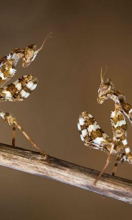 48334 Salvapantallas y fondos de pantalla Insectos en tu teléfono. Descarga imágenes de Insectos gratis
