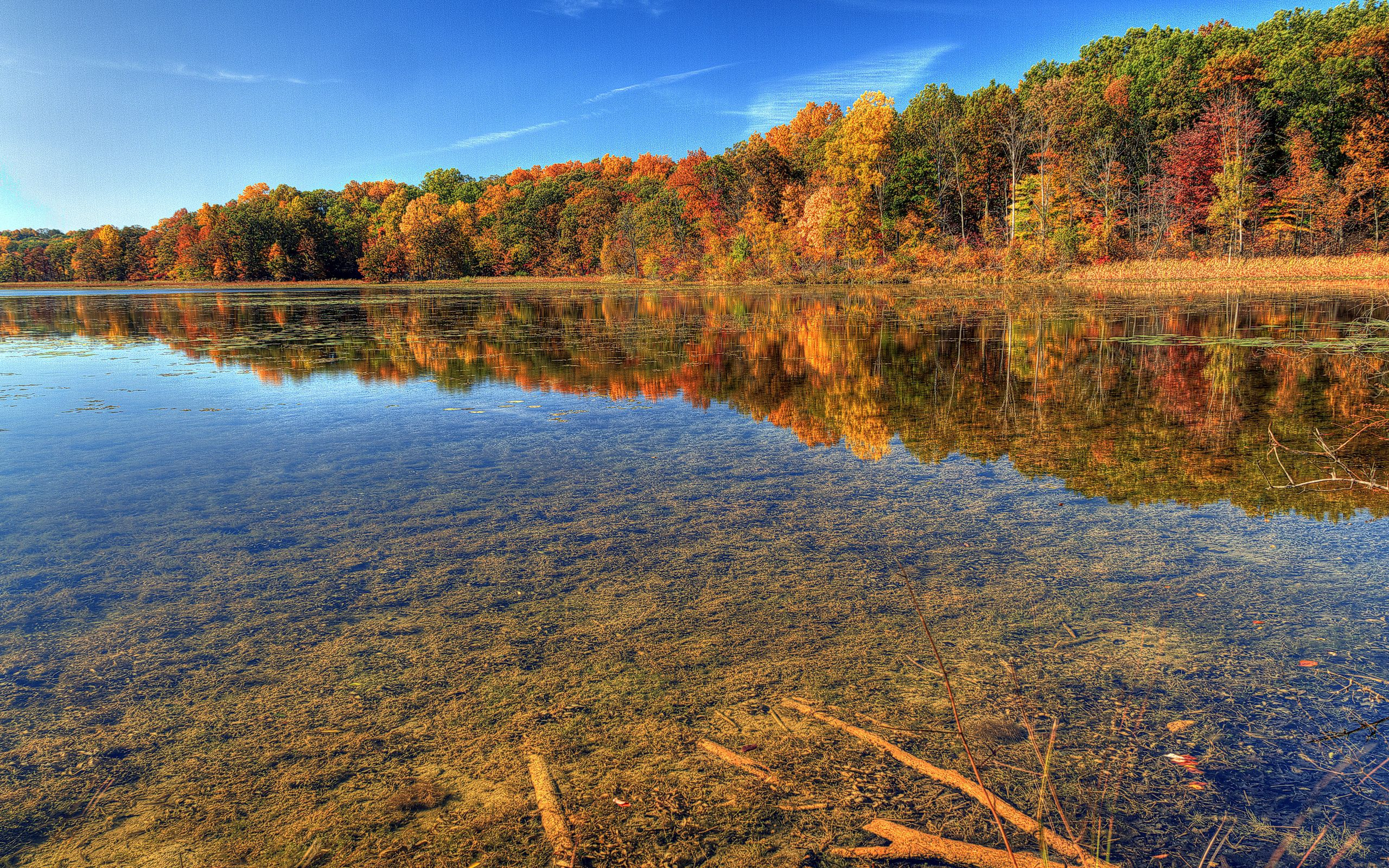 54752 download wallpaper Autumn, Nature, Water, Trees, Sky, Transparent, Branches, Brightly, Clear, I See, Bottom screensavers and pictures for free