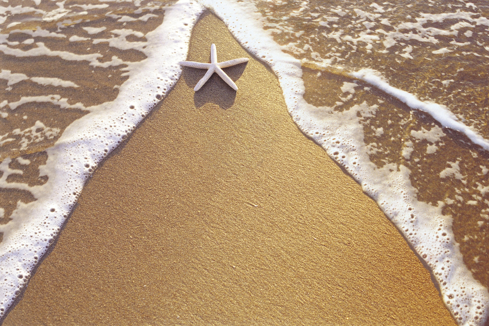 58551 download wallpaper Nature, Starfish, Sand, Sea, Foam, Triangle screensavers and pictures for free