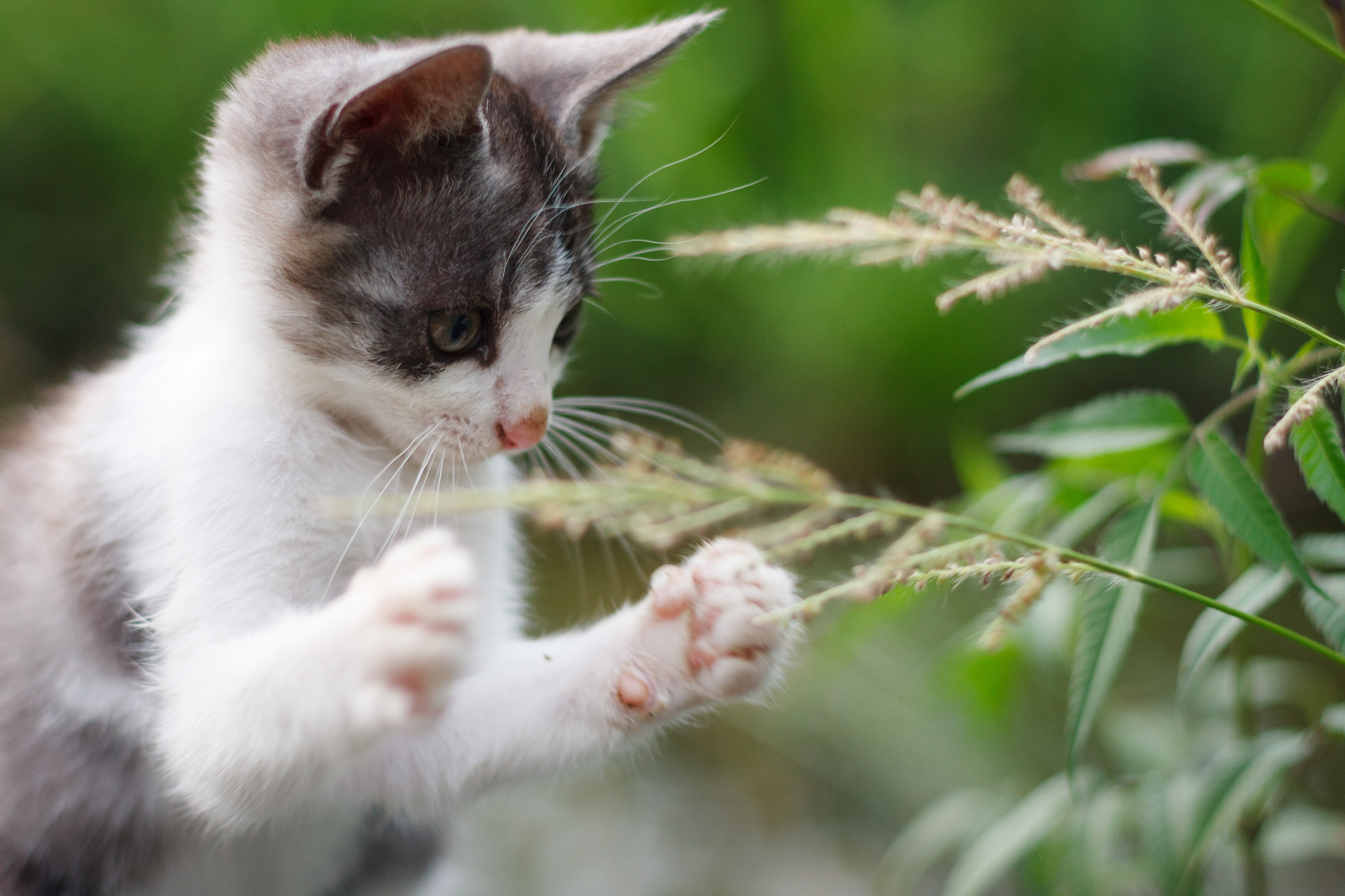 79673 download wallpaper Animals, Kitty, Kitten, Paws, Cool, Grass screensavers and pictures for free