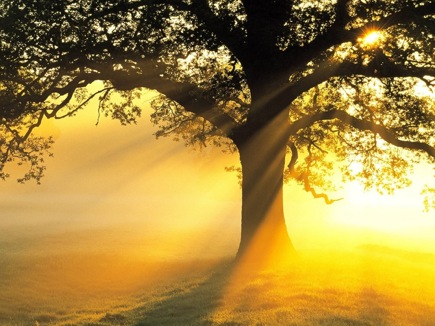 49400 скачать обои Пейзаж, Природа, Деревья, Солнце - заставки и картинки бесплатно