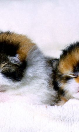 140906 download wallpaper Animals, Kittens, Couple, Pair, Newborn, Newborns, Blind screensavers and pictures for free