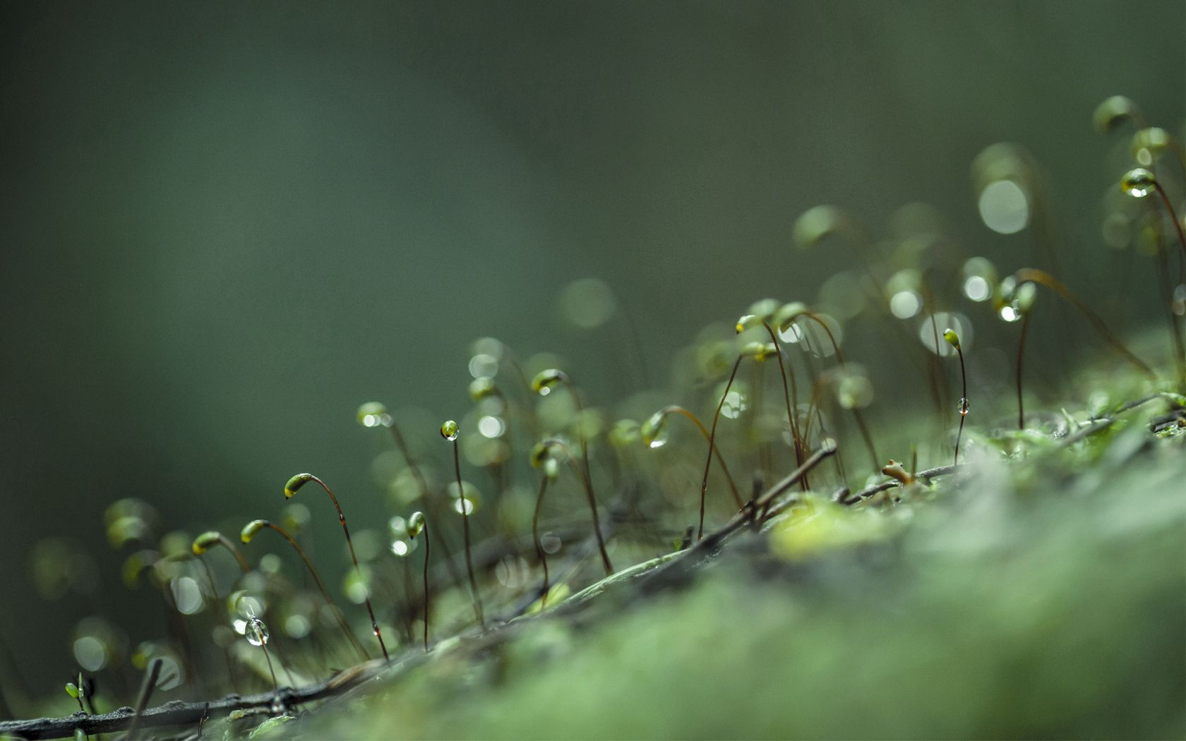 111382 download wallpaper Macro, Grass, Sprouts, Drops screensavers and pictures for free
