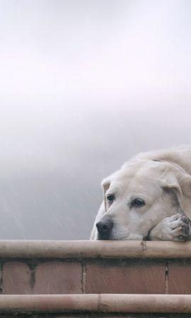 39716 baixar papel de parede Animais, Cães - protetores de tela e imagens gratuitamente