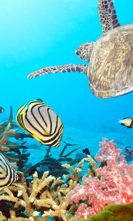 18493 download wallpaper Animals, Turtles, Sea screensavers and pictures for free