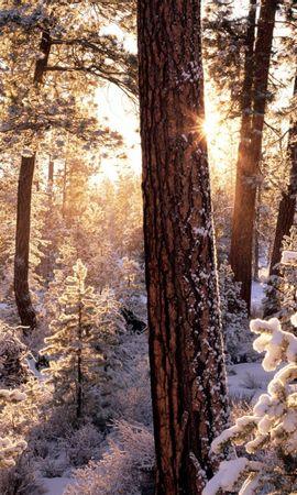 12312 скачать обои Пейзаж, Зима, Деревья, Снег, Елки - заставки и картинки бесплатно