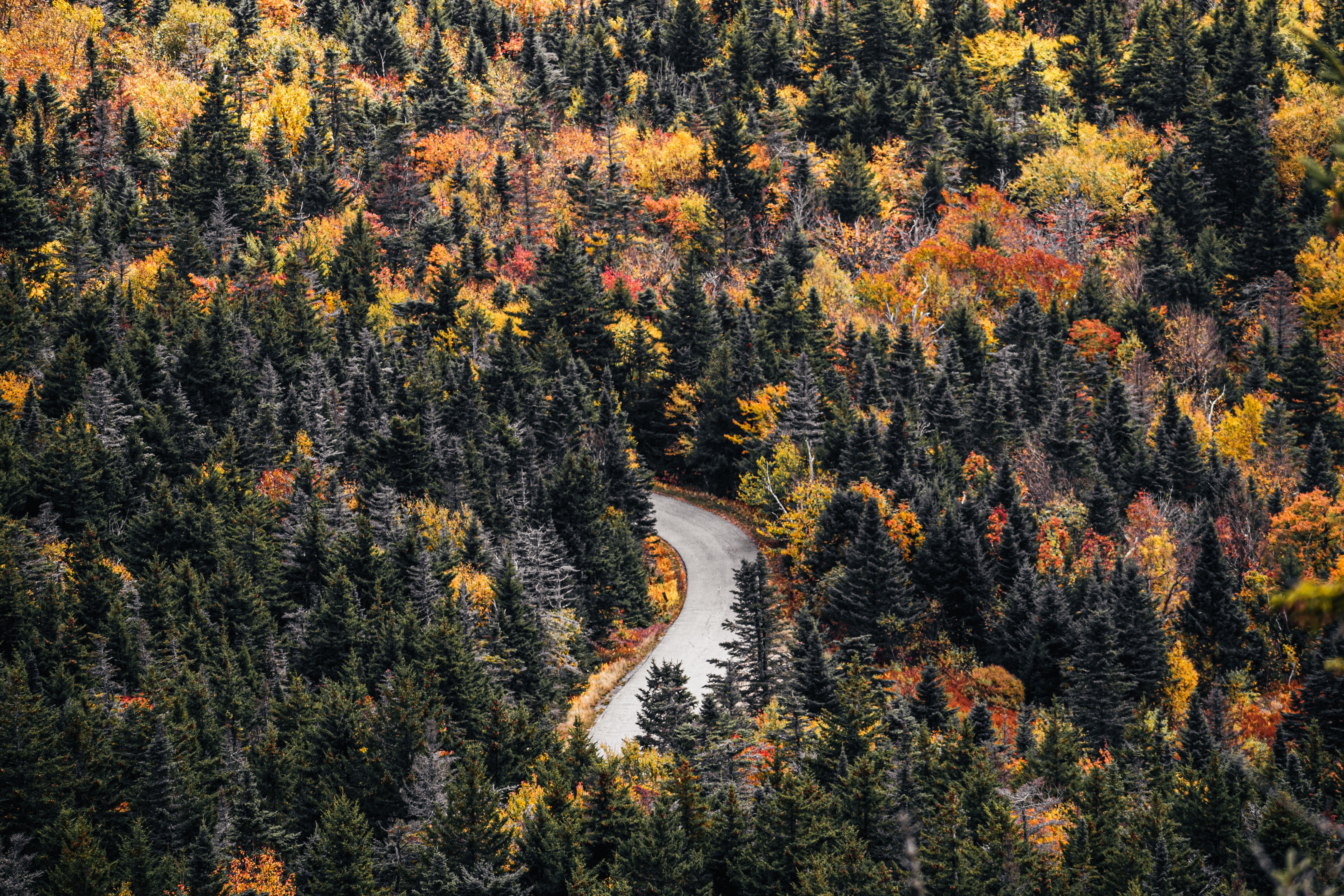 141351 download wallpaper Nature, Road, Forest, Trees, Autumn screensavers and pictures for free