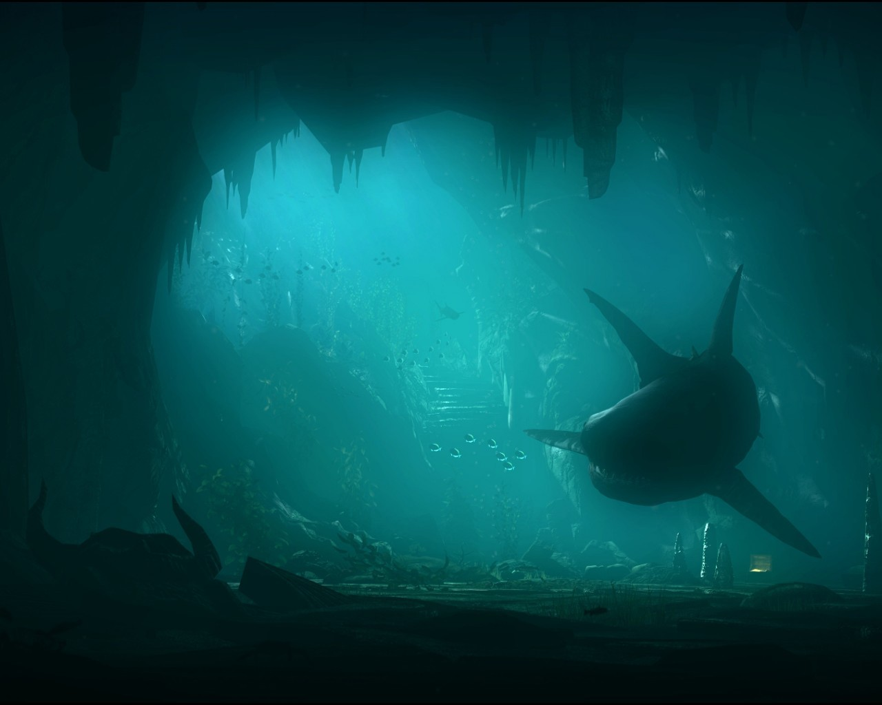 19891 download wallpaper Animals, Sea, Sharks, Fishes, Pictures screensavers and pictures for free