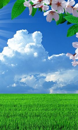 22050 скачать обои Пейзаж, Цветы, Деревья, Поля, Облака - заставки и картинки бесплатно