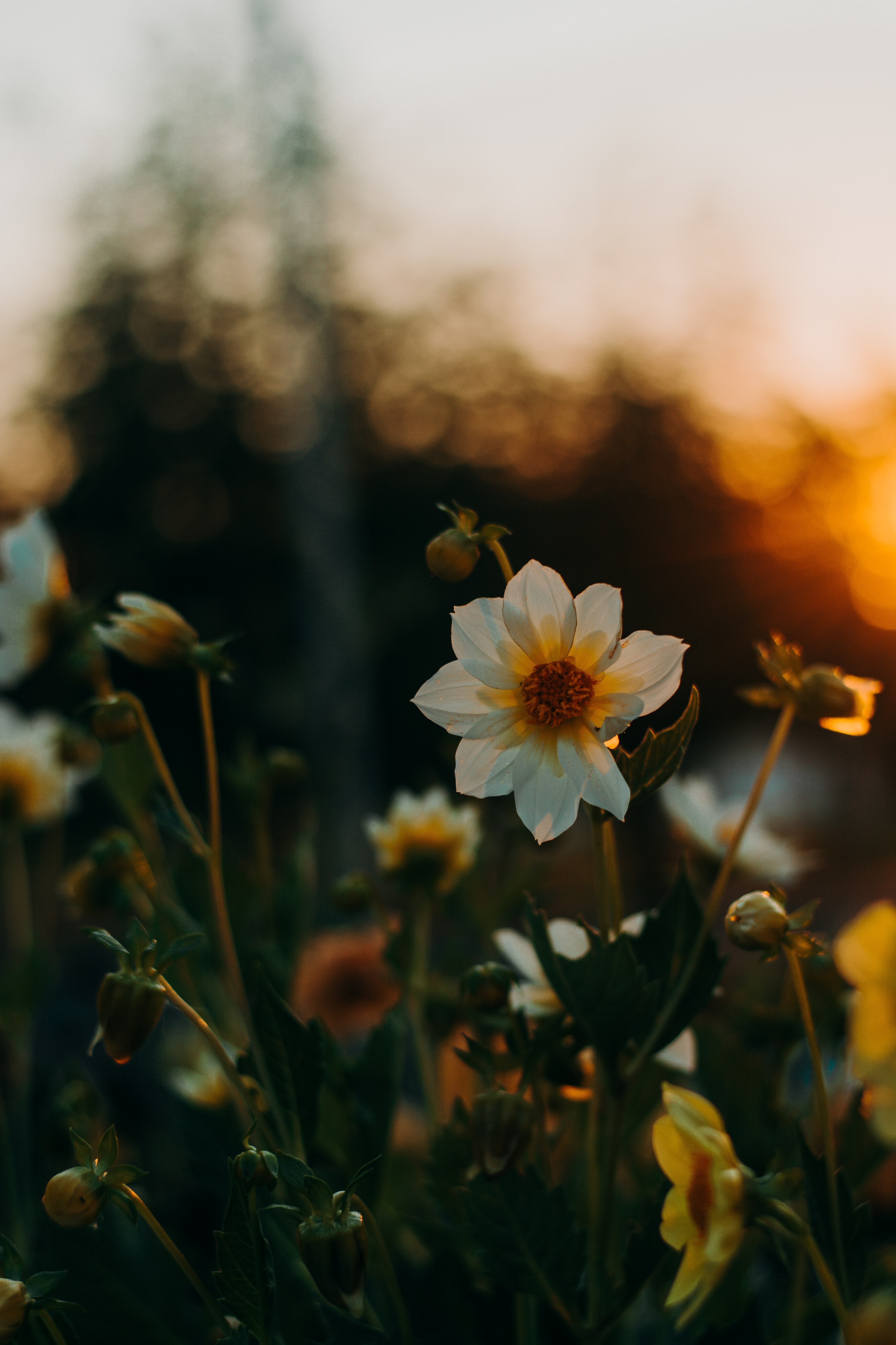 117545 Screensavers and Wallpapers Flower Bed for phone. Download Flowers, Sunset, Blur, Smooth, Flower Bed, Flowerbed pictures for free