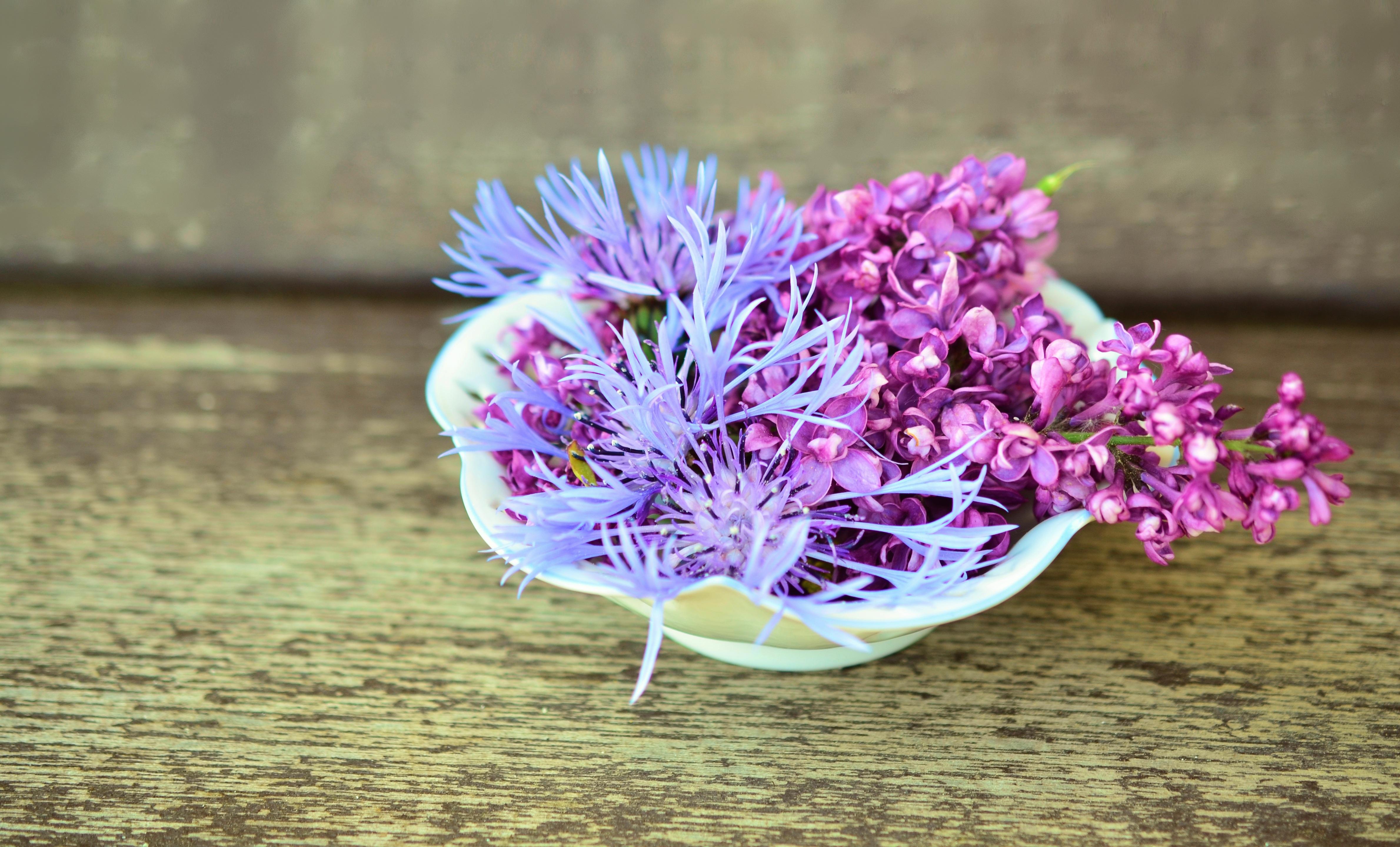 74601 Hintergrundbild herunterladen Blumen, Lilac, Anmeldung, Typografie, Kornblume - Bildschirmschoner und Bilder kostenlos