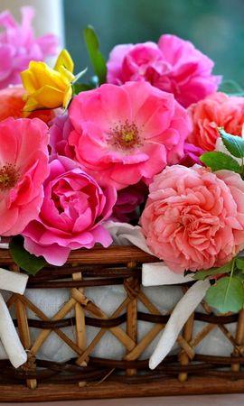 38474 télécharger le fond d'écran Plantes, Fleurs, Bouquets - économiseurs d'écran et images gratuitement