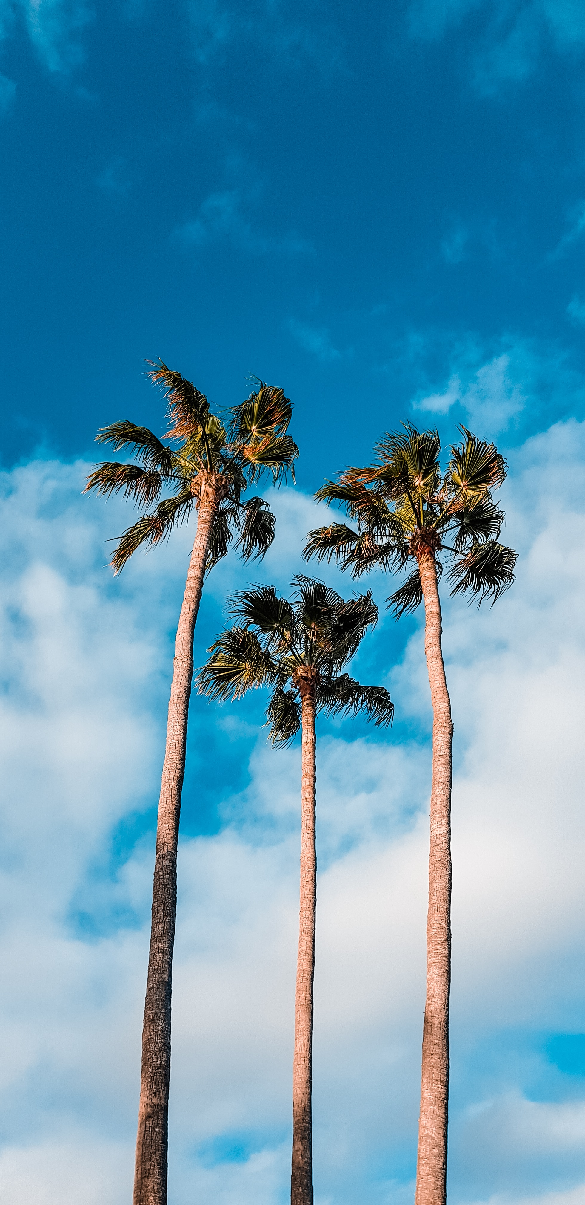 67793 download wallpaper Nature, Sky, Clouds, Tropics, Trees, Palms screensavers and pictures for free