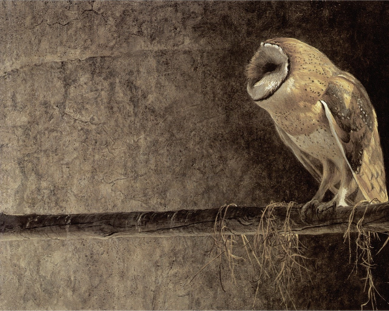 Download mobile wallpaper Owl, Animals, Birds for free.