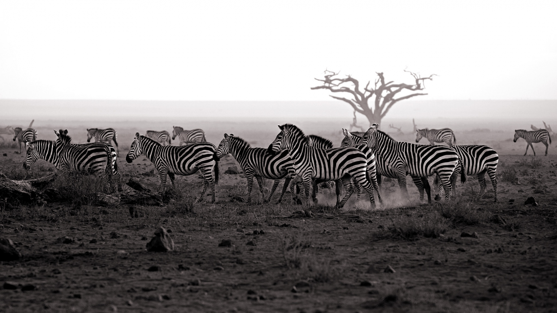 45769 download wallpaper Animals, Landscape, Zebra screensavers and pictures for free
