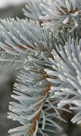 25424 скачать обои Растения, Зима, Деревья, Снег, Елки - заставки и картинки бесплатно