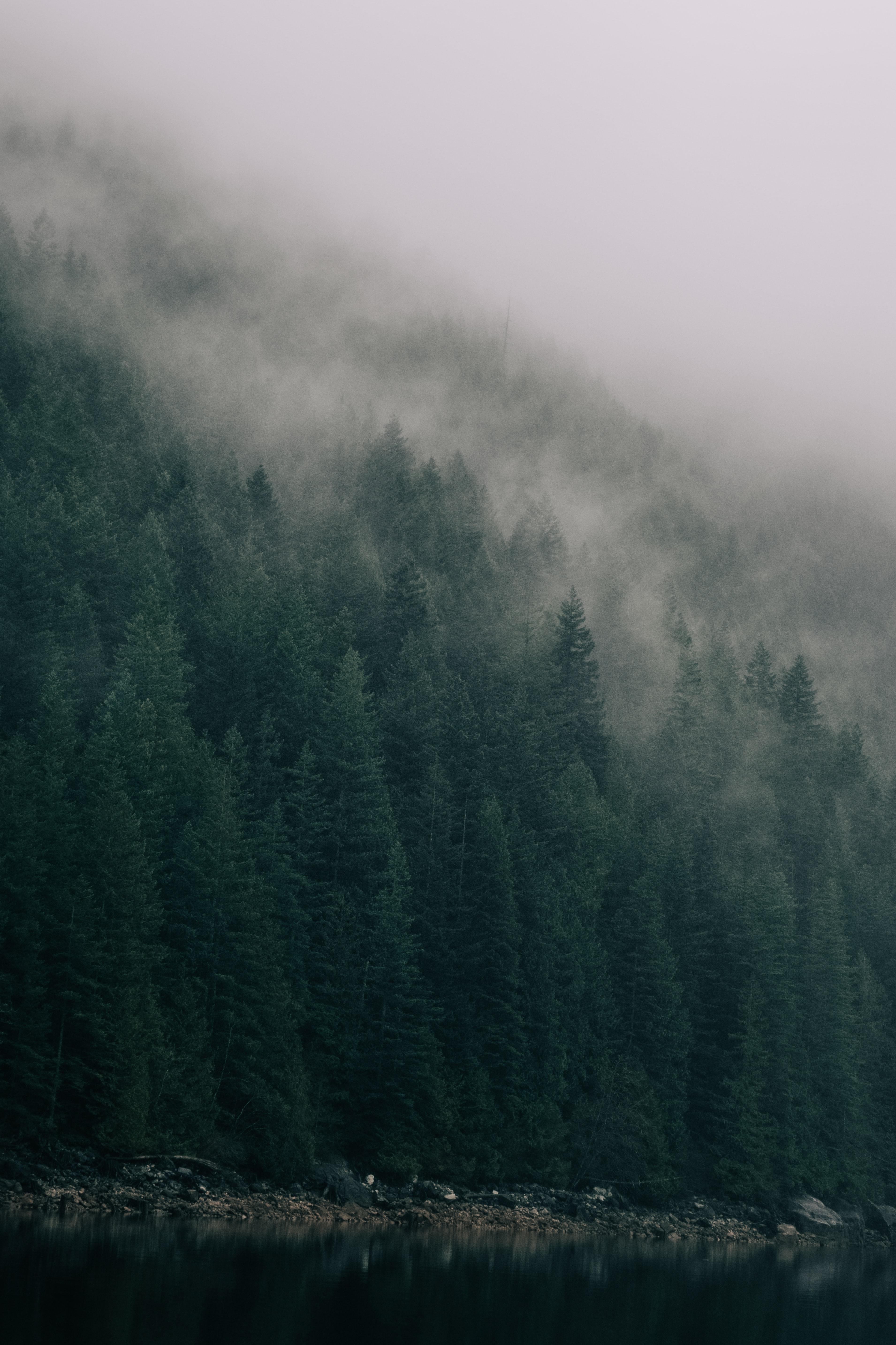 128157 免費下載壁紙 森林, 树, 云, 云端, 湖, 湖景, 支撑, 海岸, 性质 屏保和圖片