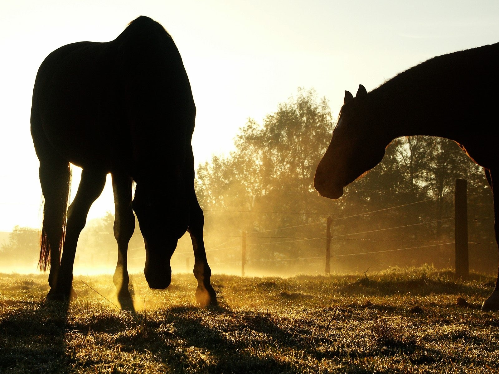906 download wallpaper Animals, Horses screensavers and pictures for free