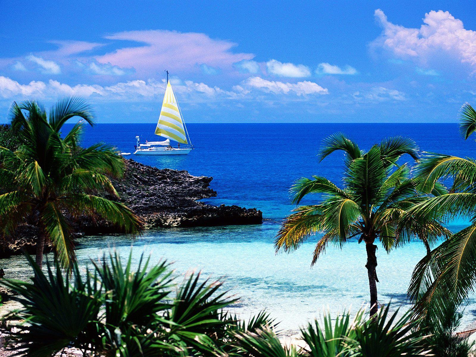 12236 Заставки и Обои Яхты на телефон. Скачать Пейзаж, Вода, Море, Яхты, Пальмы картинки бесплатно