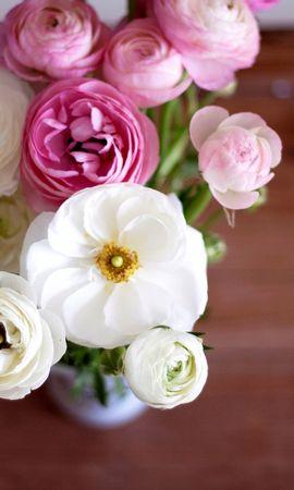 137002携帯電話用の白壁紙を無料でダウンロード、フラワーズ, キンポウゲ, ラナンキュラス, ラヌンクルス, 花束, ブーケ, ピンク, つぼみ, 蕾, 花びら, 花瓶 白写真と携帯電話用スクリーンセーバー