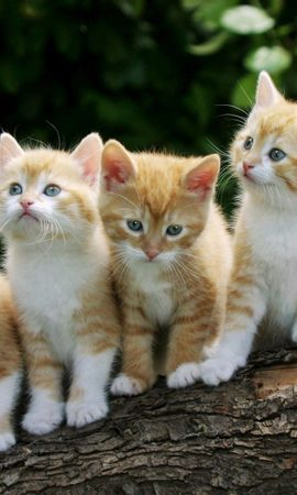 157860 download wallpaper Animals, Kittens, Log, Sit, Flowers screensavers and pictures for free