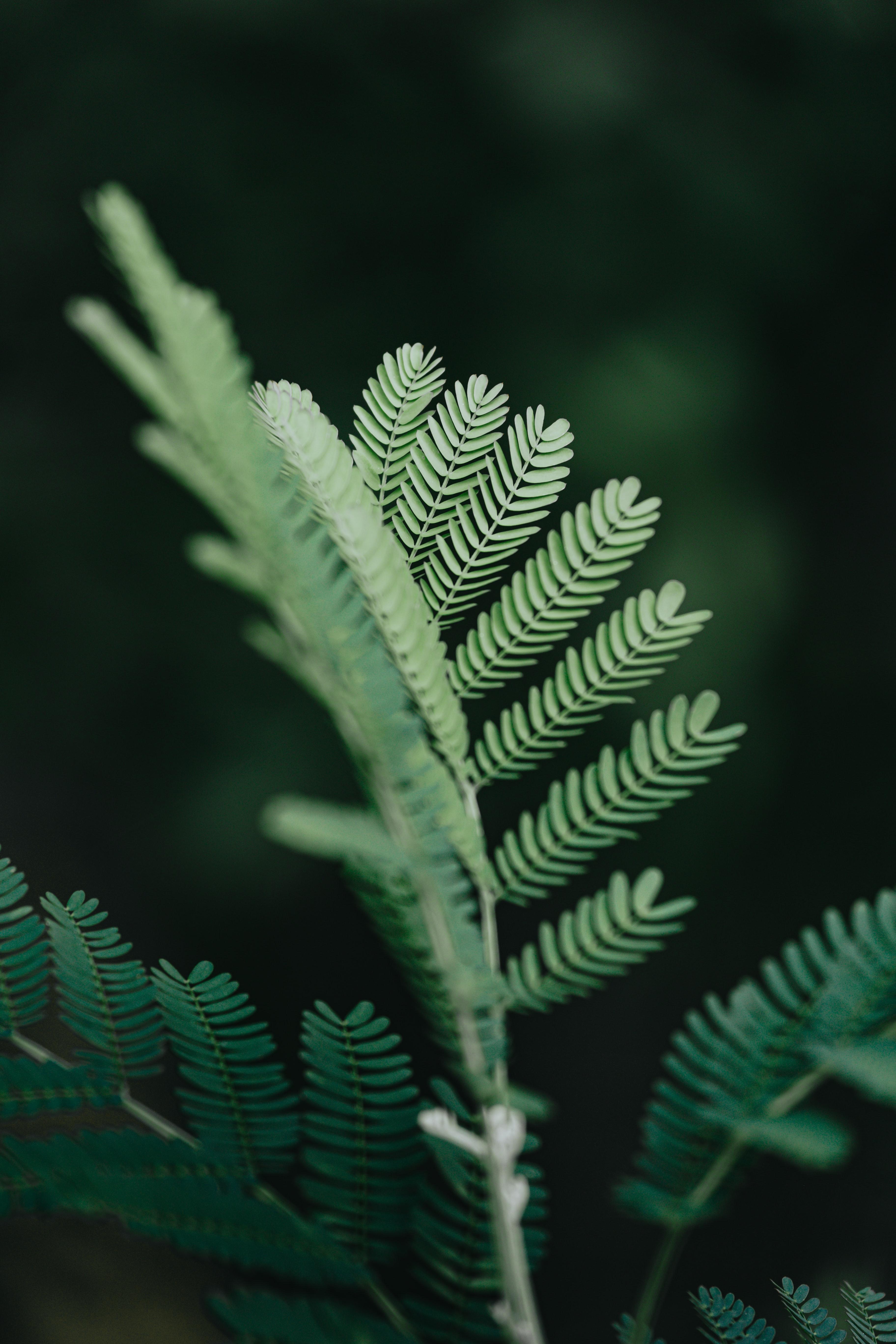 95717 скачать обои Макро, Ветка, Листья, Растение, Зеленый - заставки и картинки бесплатно