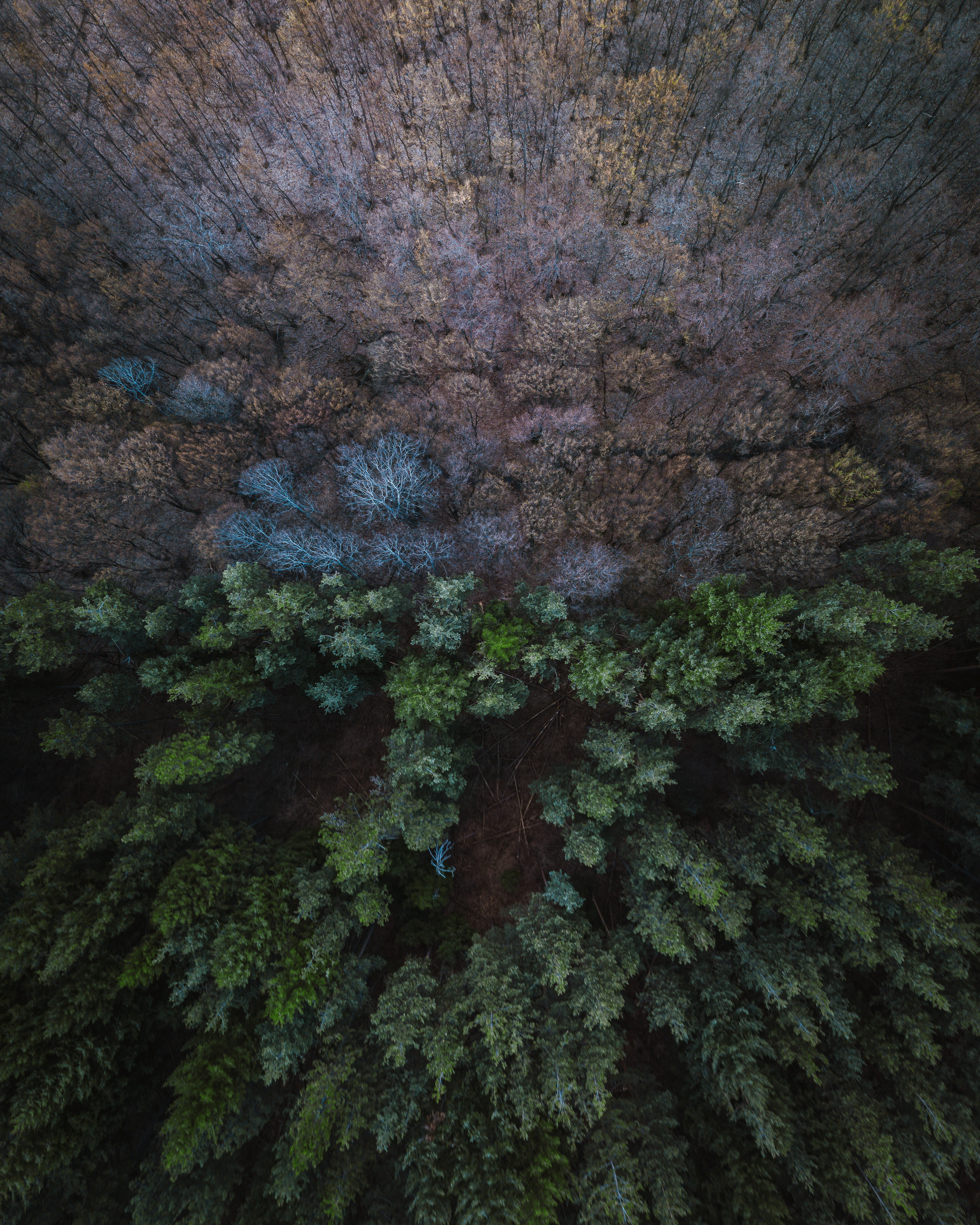 127980 download wallpaper Nature, View From Above, Balance, Forest screensavers and pictures for free