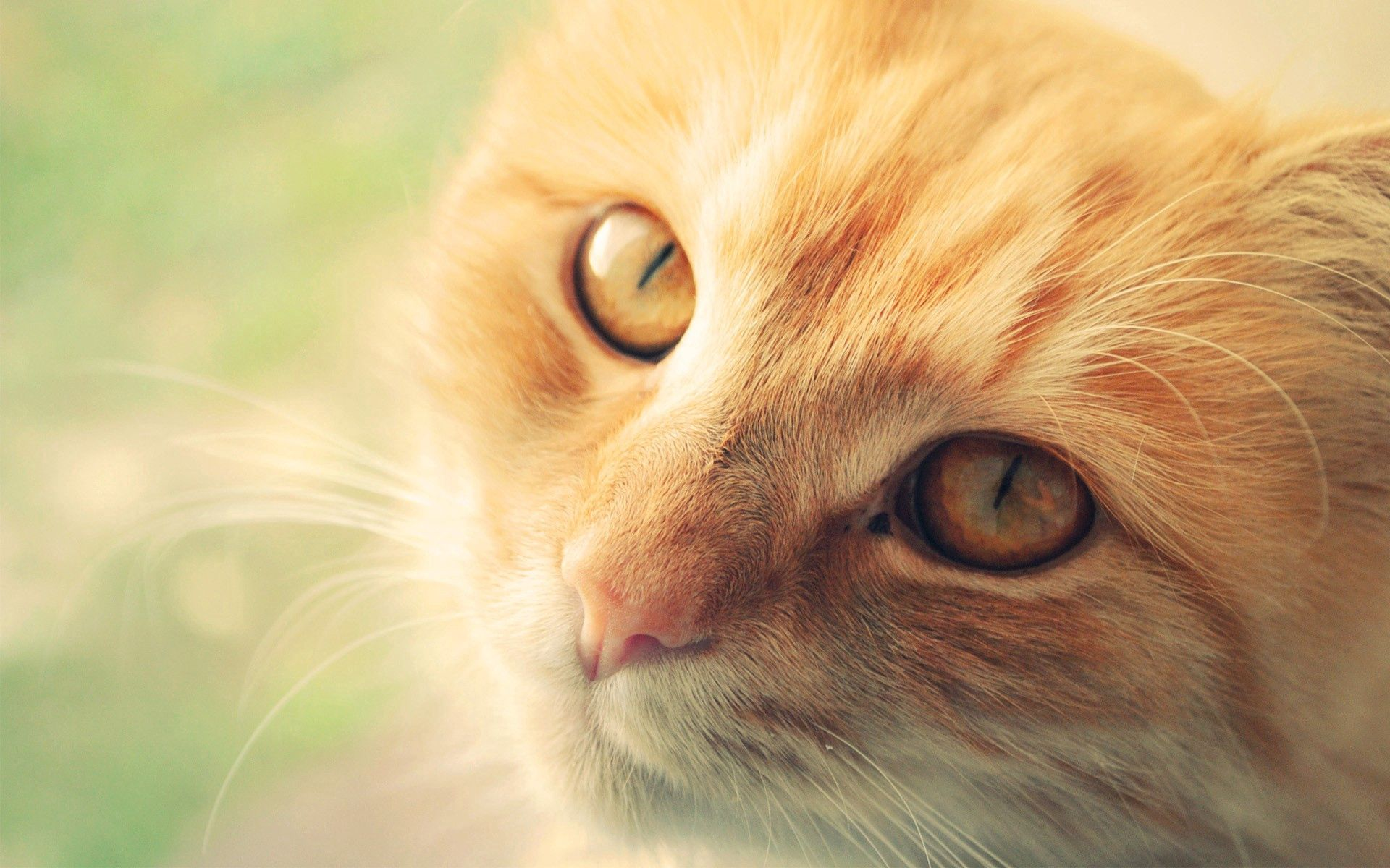 68939 download wallpaper Animals, Cat, Muzzle, Redhead, Sight, Opinion screensavers and pictures for free