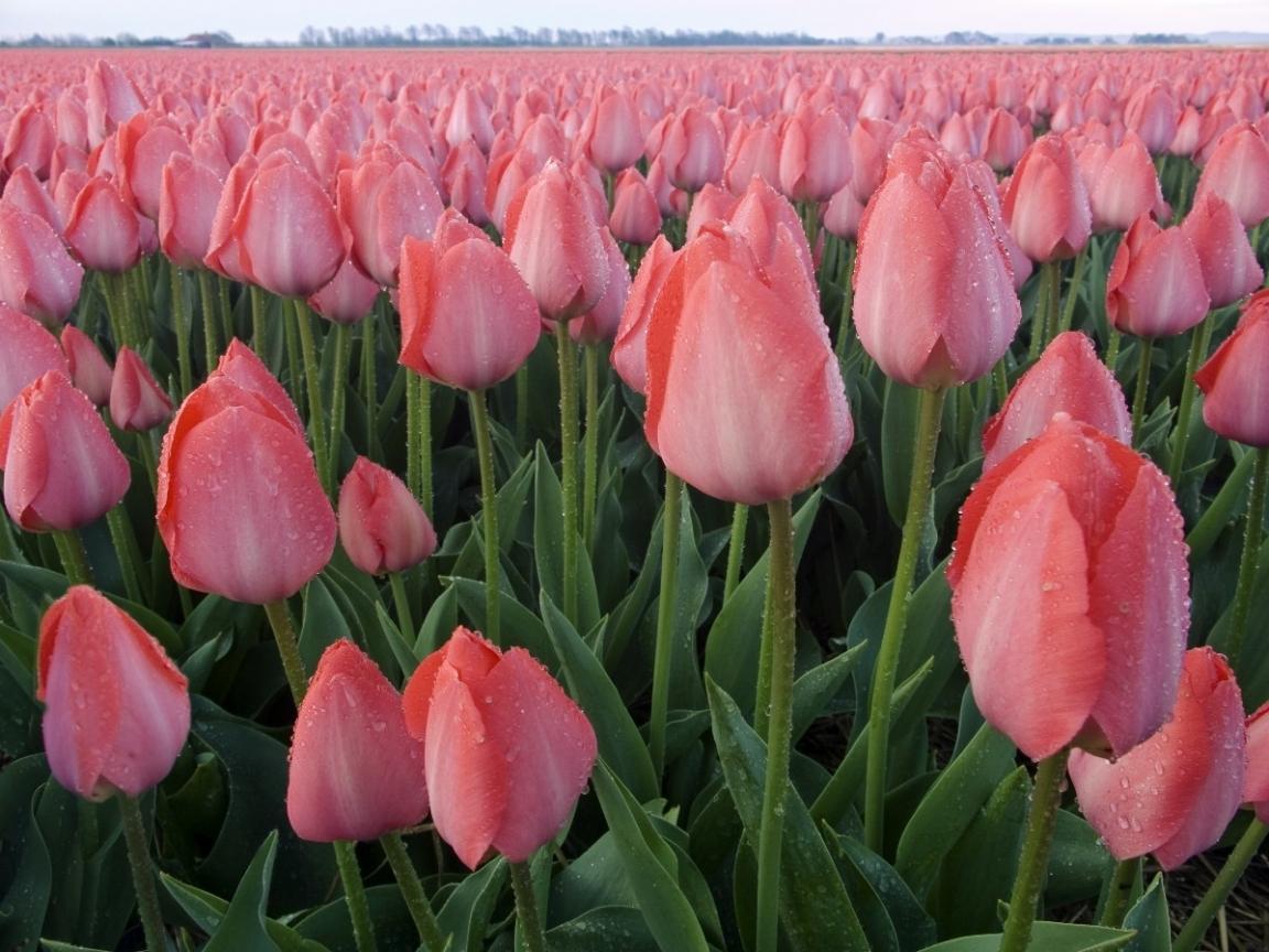 26331 скачать обои Растения, Цветы - заставки и картинки бесплатно