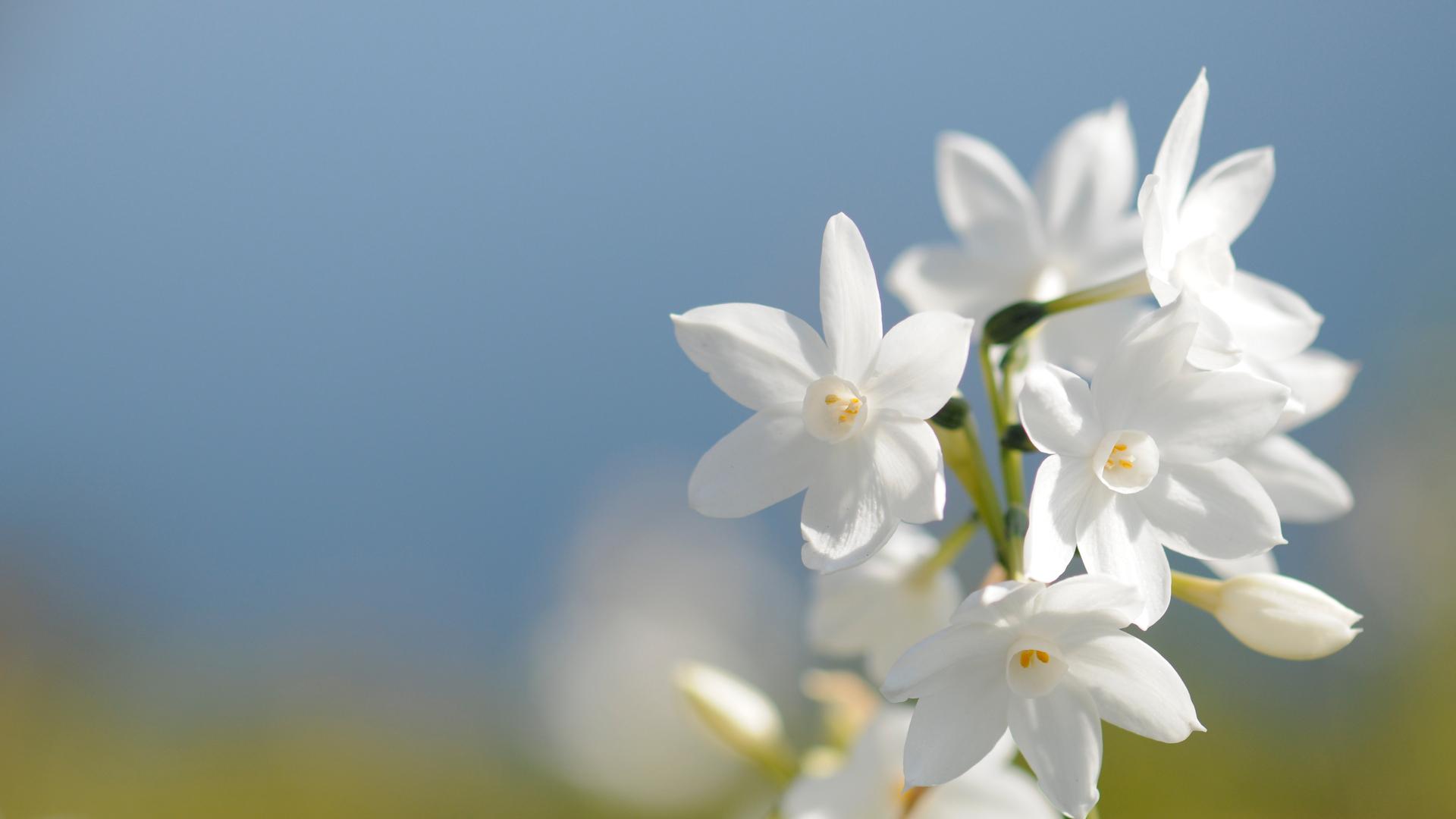 17343 скачать обои Растения, Цветы - заставки и картинки бесплатно