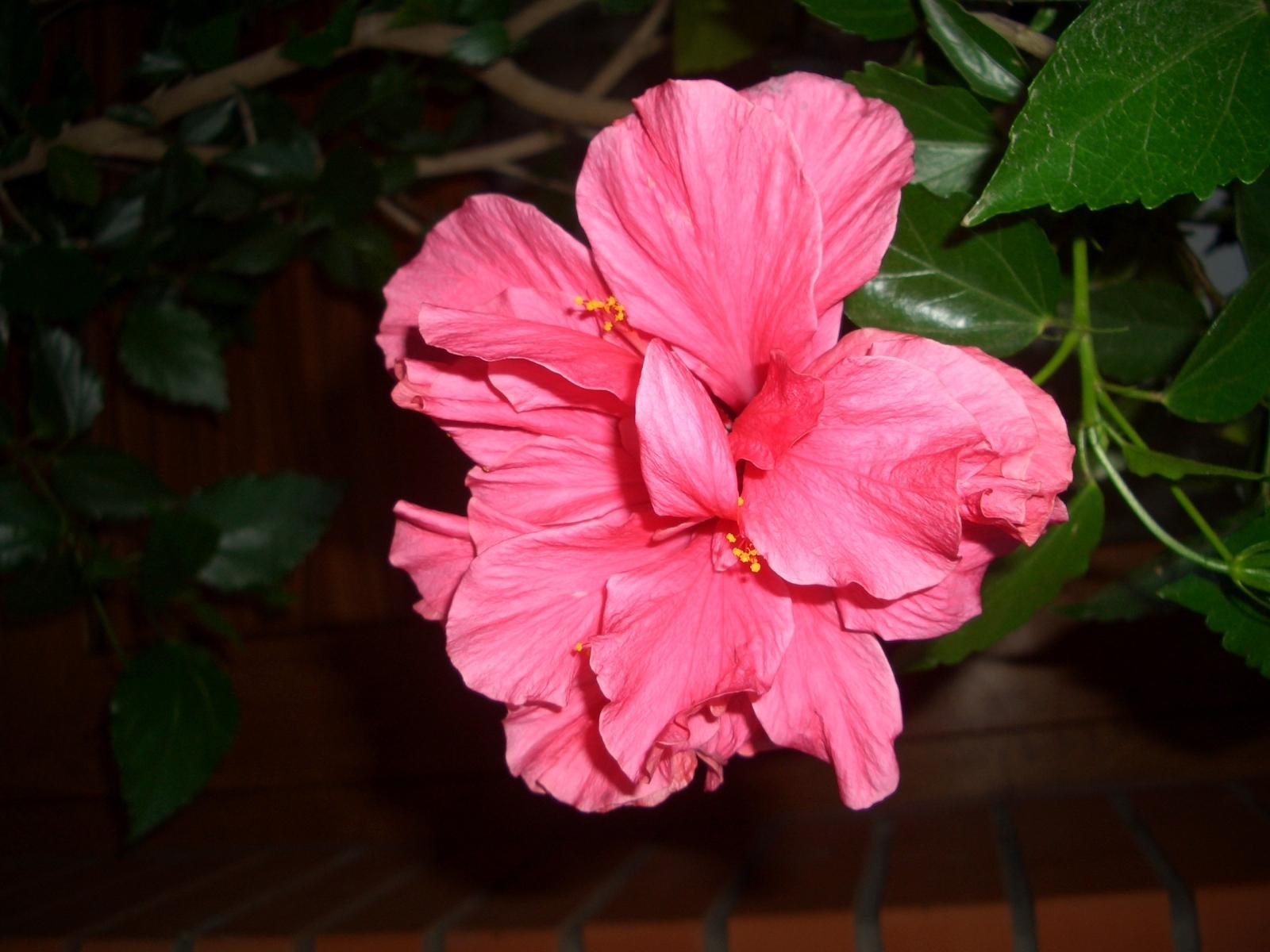 6612 скачать обои Растения, Цветы - заставки и картинки бесплатно