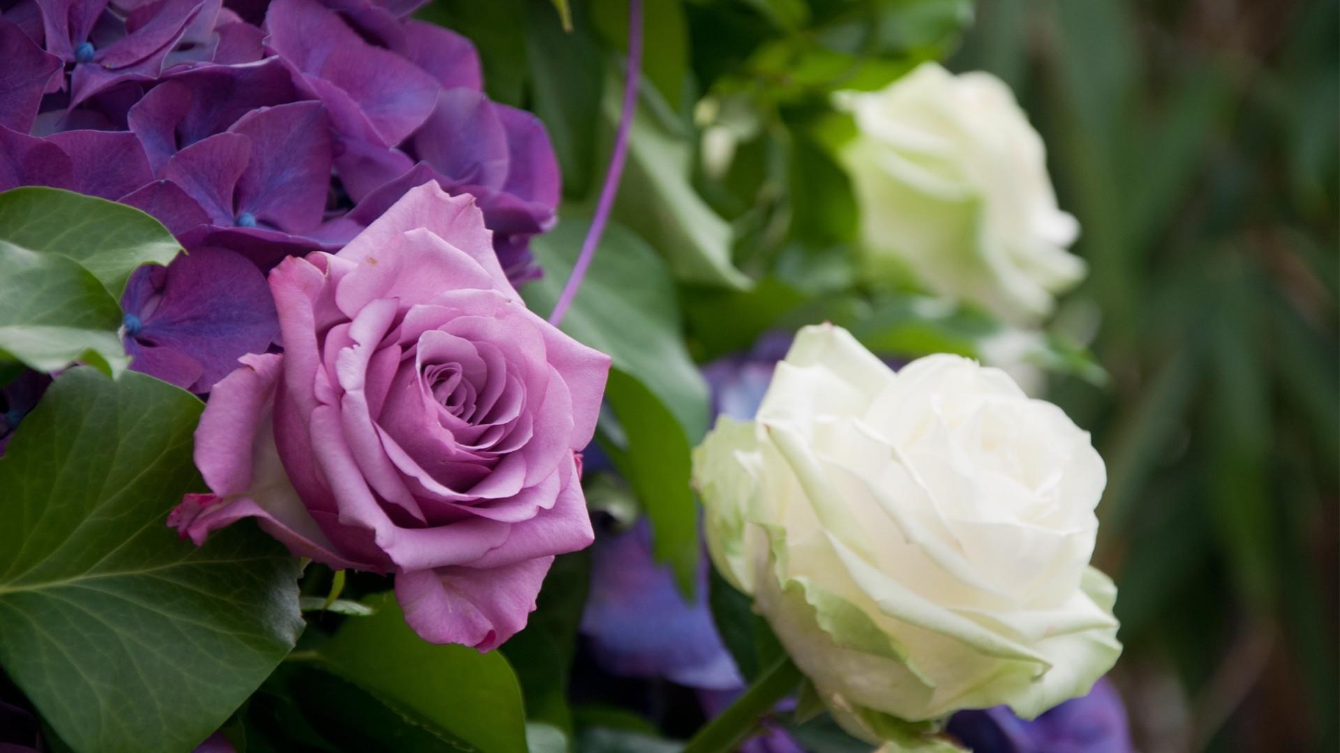 16388 скачать обои Растения, Цветы, Розы - заставки и картинки бесплатно