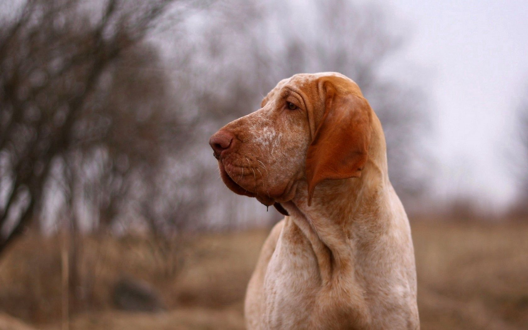 155701 download wallpaper Animals, Dog, Sight, Opinion, Friend, Profile screensavers and pictures for free