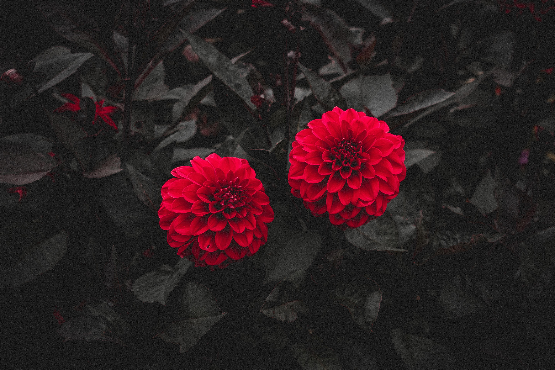 Beliebte Rot Bilder für Mobiltelefone