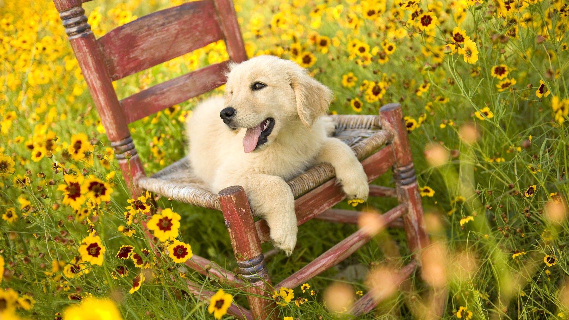 95475 скачать обои Животные, Трава, Стул, Собака - заставки и картинки бесплатно