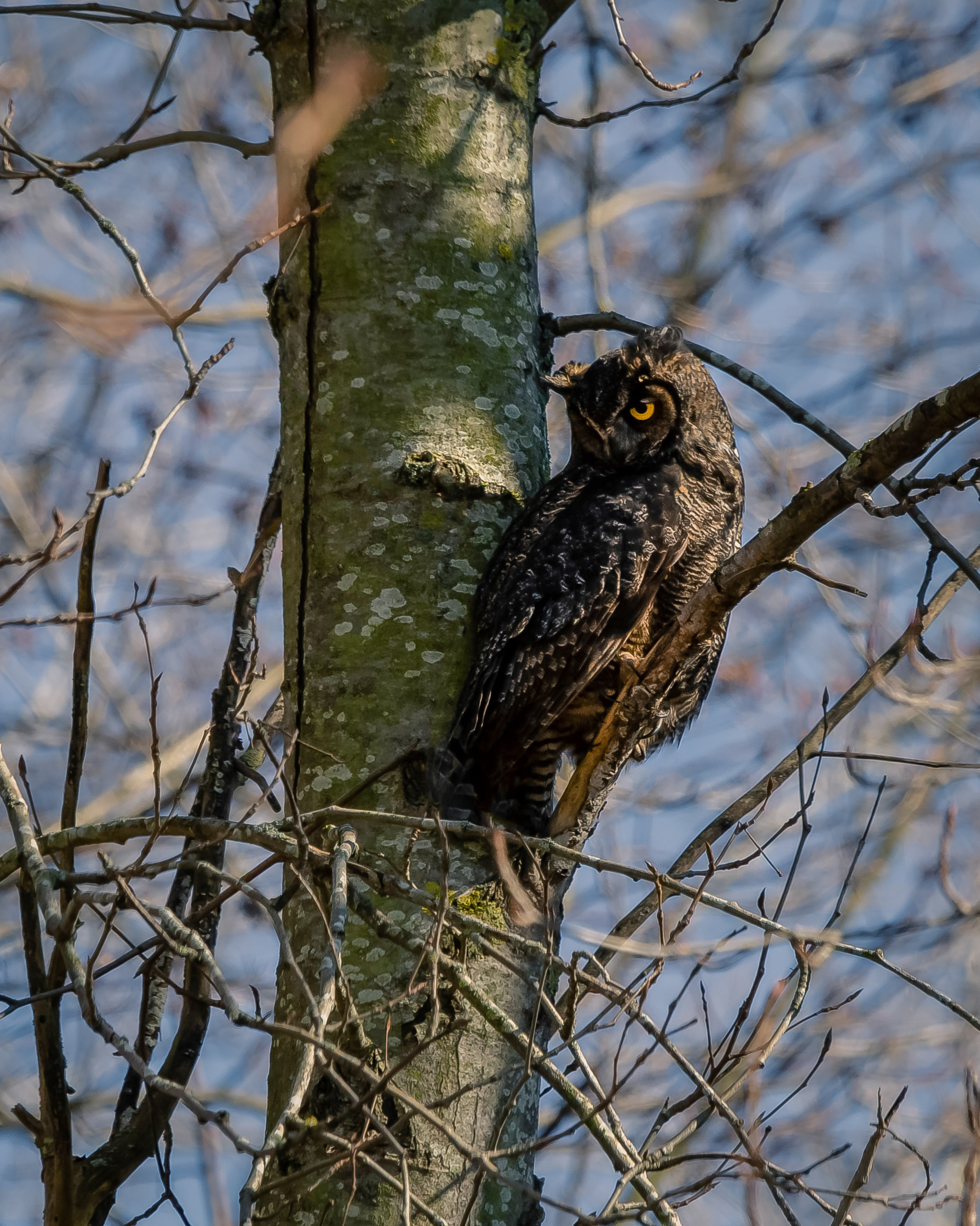 95058 download wallpaper Animals, Owl, Bird, Sight, Opinion, Wood, Tree screensavers and pictures for free
