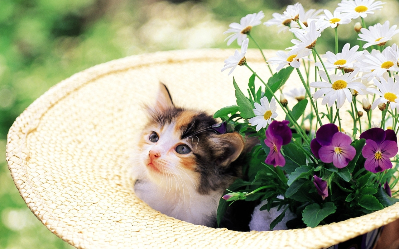 9129 download wallpaper Cats, Animals, Flowers screensavers and pictures for free