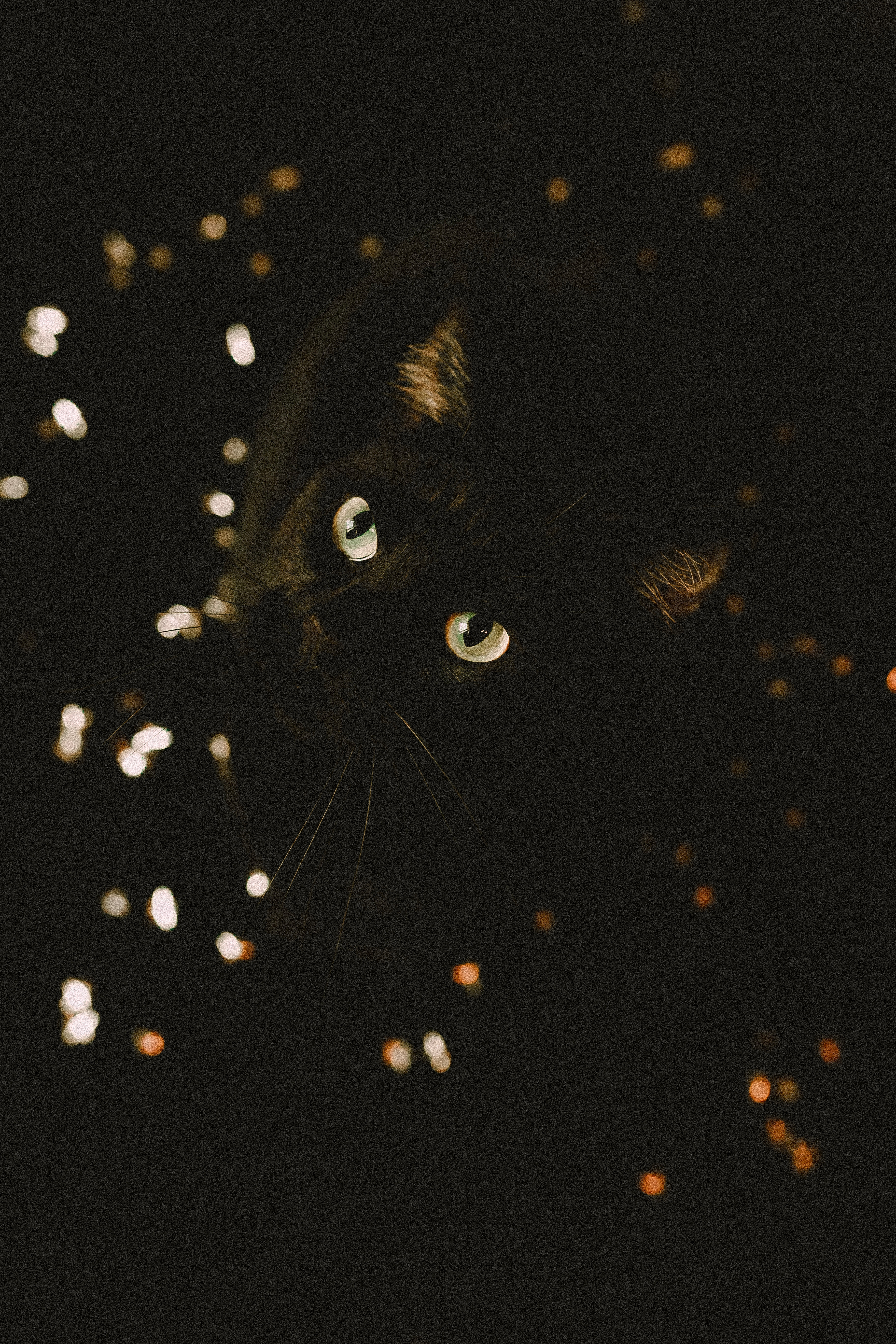 126513 Screensavers and Wallpapers Pet for phone. Download Animals, Cat, Sight, Opinion, Pet, Animal pictures for free