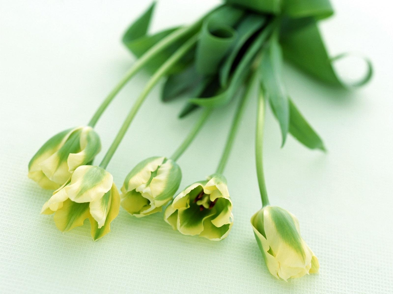 5589 скачать обои Растения, Цветы, Тюльпаны - заставки и картинки бесплатно