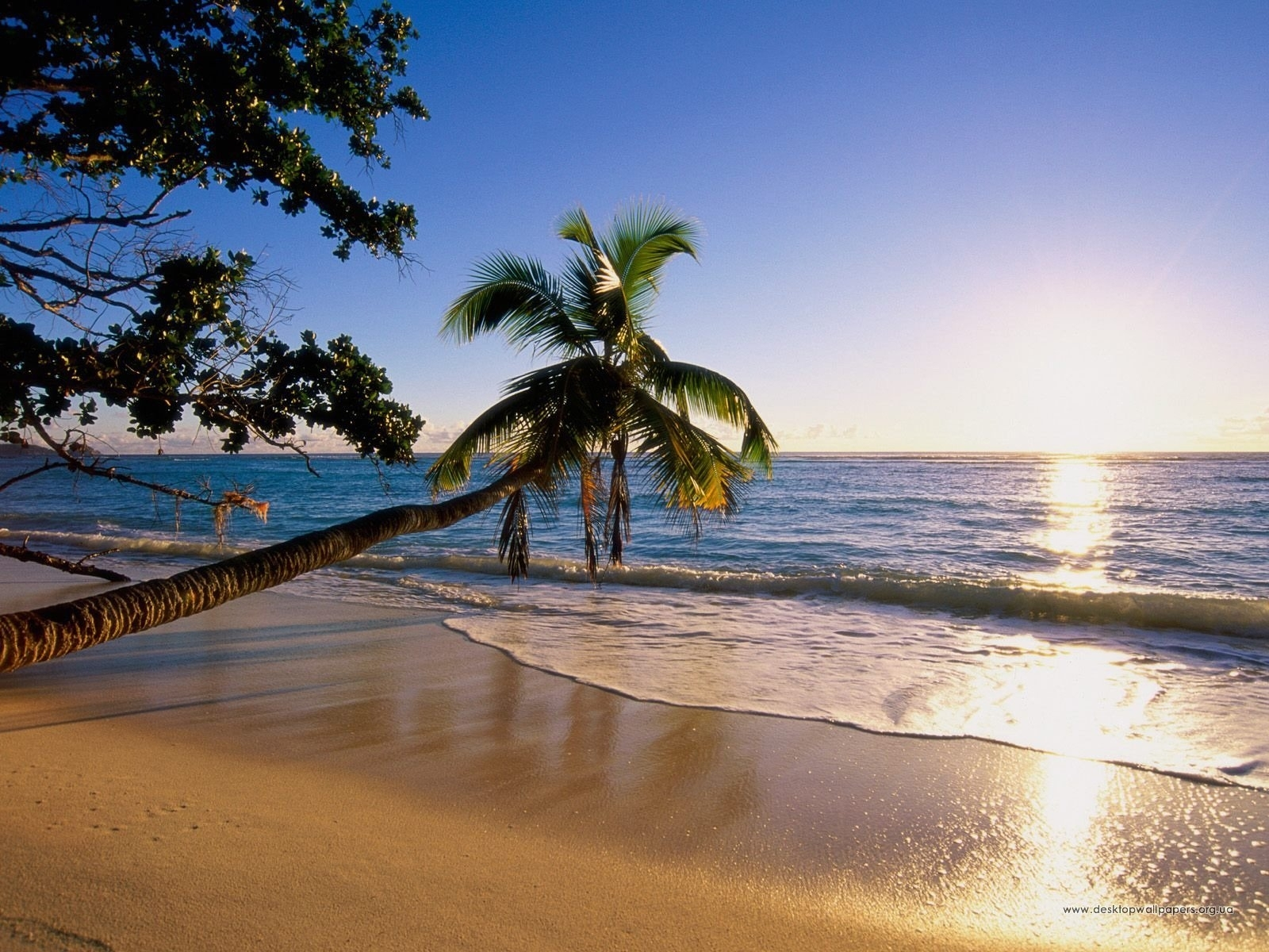 1038 download wallpaper Landscape, Water, Sunset, Sea, Sun, Beach, Palms screensavers and pictures for free