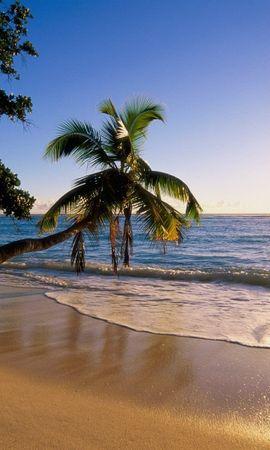 1038 télécharger le fond d'écran Paysage, Eau, Coucher De Soleil, Mer, Sun, Plage, Palms - économiseurs d'écran et images gratuitement