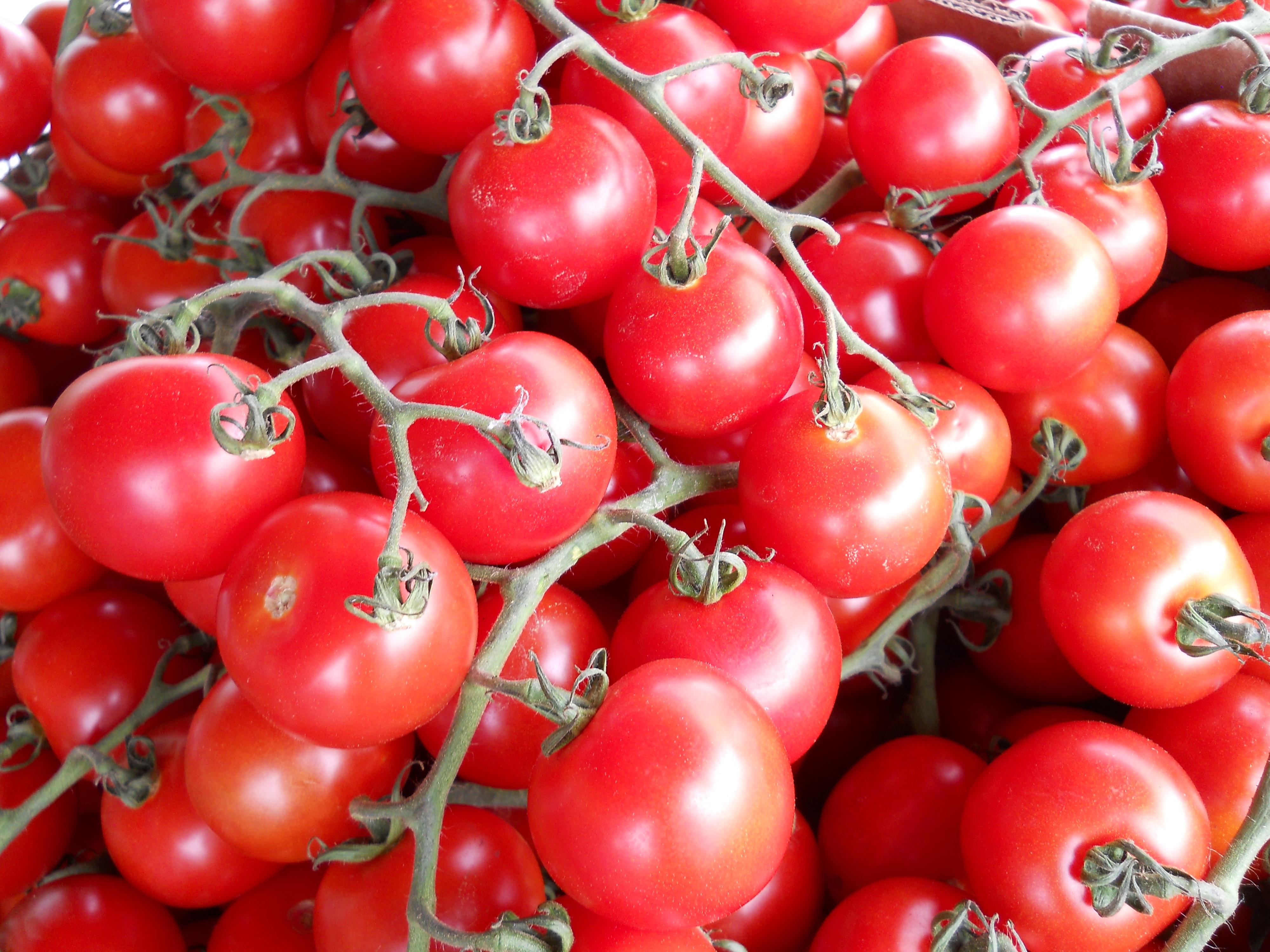 109555 Заставки и Обои Овощи на телефон. Скачать Еда, Овощи, Ветка, Томаты картинки бесплатно